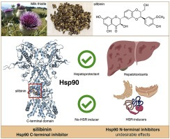 Revisiting silibinin as a novobiocin-like Hsp90 C-terminal inhibitor: Computational modeling and experimental validation