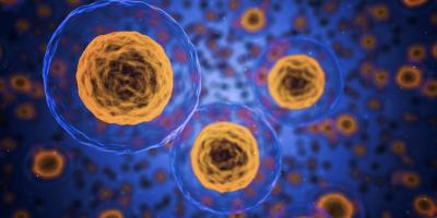 Un estudio descubre por qué las personas mayores tienen respuestas inmunitarias reducidas a la terapia del cáncer
